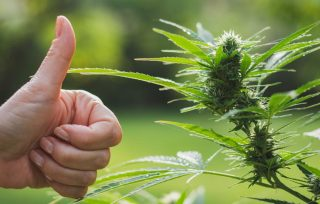 Finding a Reliable online weed dispensary in Canada